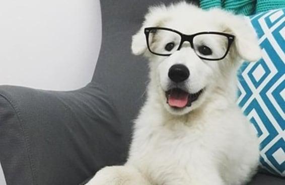 27 cachorrinhos que querem que você tenha uma boa semana