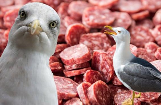 Como um caso envolvendo gaivotas, pepperoni e uma janela aberta baniu um homem de um hotel por 17 anos