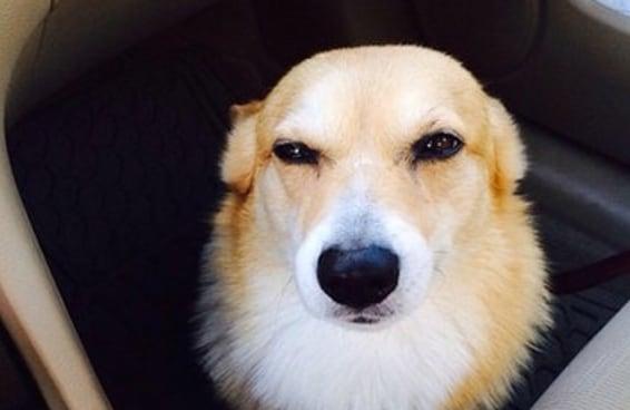 21 cães que sabem exatamente o que você fez