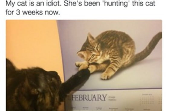 19 gatos que não são as criaturas mais espertas do mundo