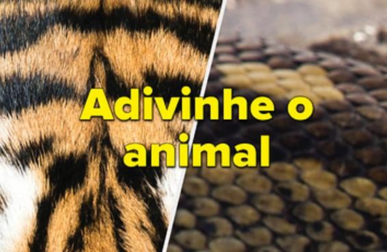 Você consegue identificar os animais nestas fotos em close-up?