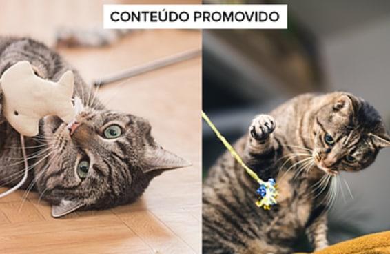20 presentes para provar que seu gato é o dono da casa