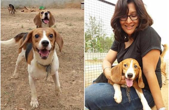 42 beagles foram resgatados de um laboratório que fazia testes em animais