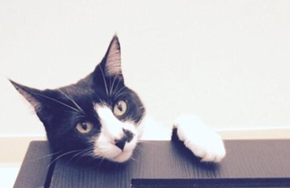 Tente não se irritar com este post se você é dono de gato