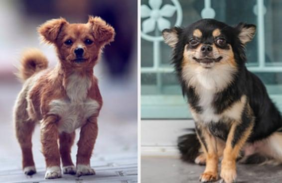 Escolha alguns cachorrinhos e diremos se você é introvertido(a) ou extrovertido(a)