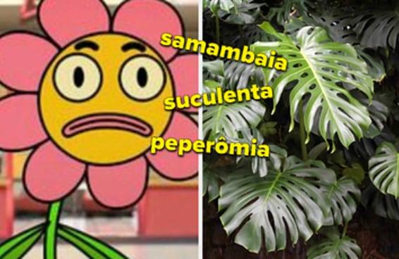 Você consegue diferenciar estas 10 variedades de plantas?