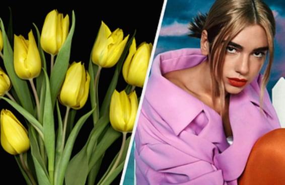 Escolha duas tulipas e descubra que música nova da Dua Lipa é você