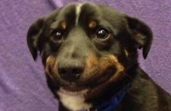"""21 fotos que farão você dizer """"minha versão canina"""""""