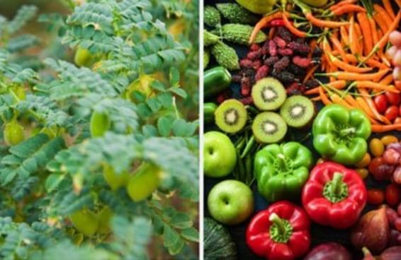 Você sabe se essas frutas e verduras crescem no solo ou em árvores?