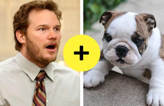 Todo mundo tem uma raça de cachorro que combina com a sua personalidade – aqui está a sua