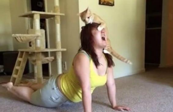 O seu gato te odeia?