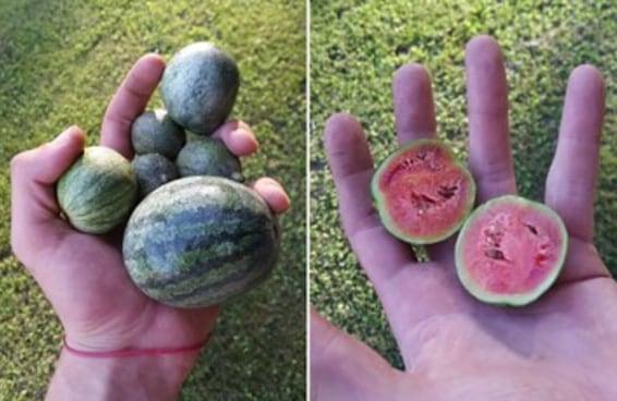 17 frutas e vegetais tão pititicos que você não sabe se ama ou odeia