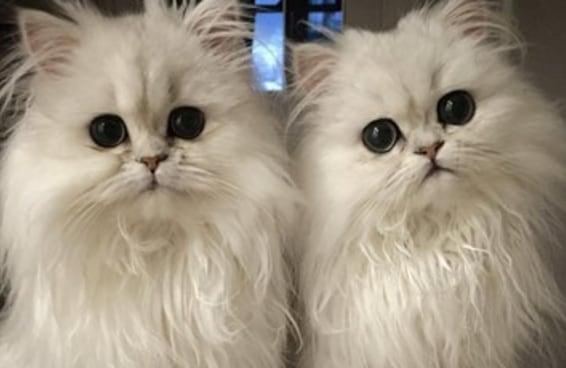 Estas gatas são tão fofinhas que nem parecem ser de verdade