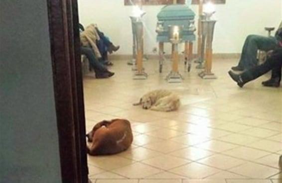 O momento incrível em que cães de rua prestaram homenagem no velório da mulher que os alimentava