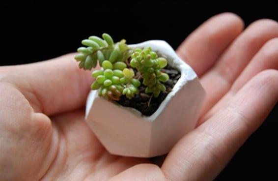 """28 formas criativas do tipo """"faça você mesmo"""" para você exibir suas plantas"""
