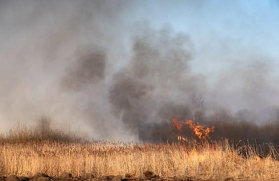 Fogo no Pantanal: saiba como ajudar e como se informar
