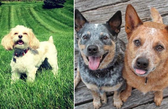 17 fotos de cachorros sorrindo que vão iluminar o seu dia