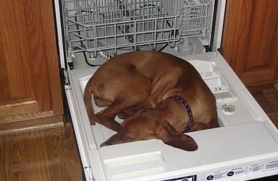 21 cachorros que dormiram onde eles bem entenderam