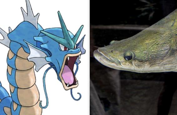 Que mistura de Pokémon com um animal brasileiro é você?