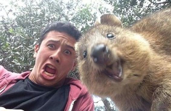 25 selfies que provam que os quokkas são as criaturas mais felizes da Terra