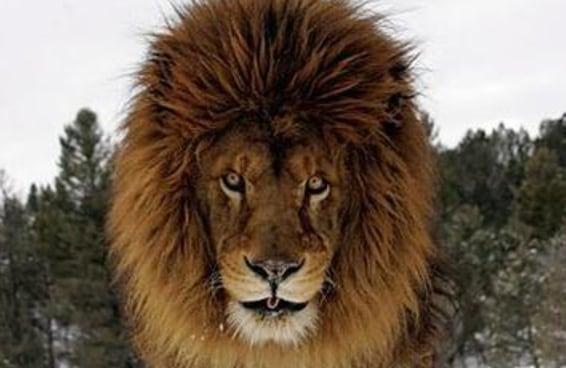 Qual animal combina com sua personalidade?