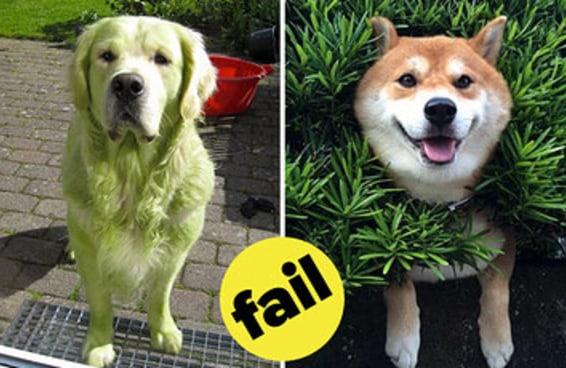 20 cães levemente criminosos que não deixam de ser fofos