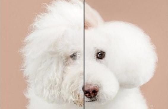 9 antes e depois de cachorrinhos que ganharam novos cortes de cabelo