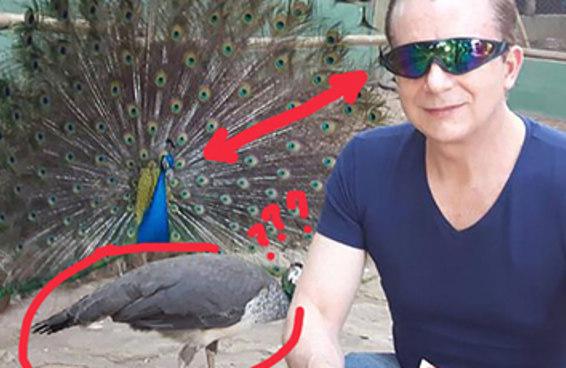 Tente não sucumbir aos encantos ocultos desta foto do Celso Russomanno e um pavão