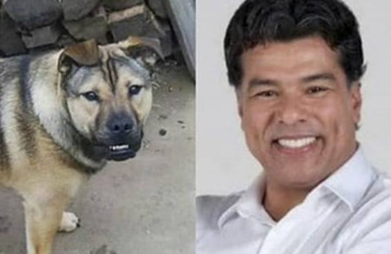 Este cachorro é a cara do Mauricio Mattar