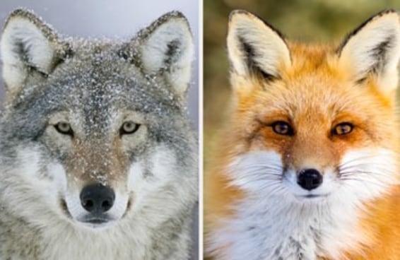 Todo mundo é a combinação de dois animais selvagens — aqui estão os seus