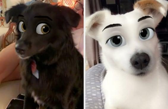 Eu estou obcecada por esse filtro que transforma cachorros em personagens da Disney