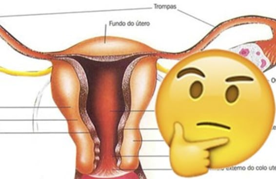 Só um ginecologista conseguirá acertar 7/7 neste teste sobre o sistema reprodutivo feminino