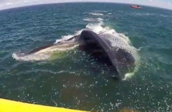 Uma baleia gigantesca ficou perigosamente muito próxima deste barco