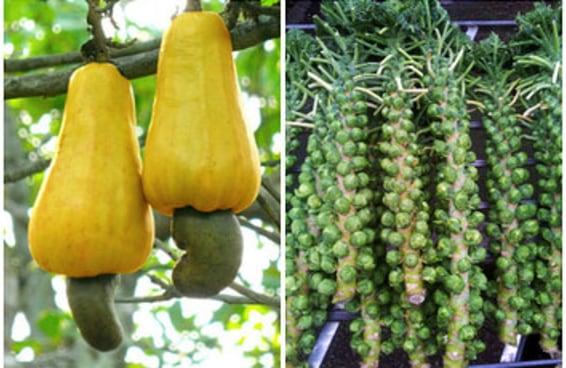 21 frutas e vegetais que você não sabia que cresciam assim