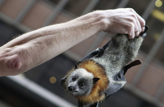 10 animais adoráveis que as mudanças climáticas estão matando