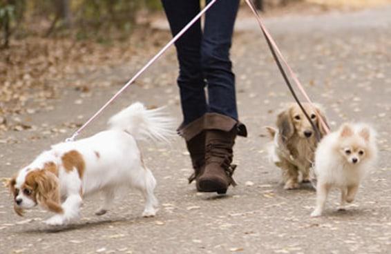 59 coisas que acontecem quando você passeia com o seu cachorro
