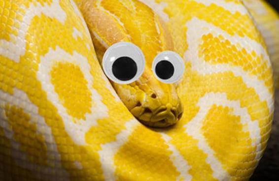 17 fotos que provam que olhos esbugalhados fazem qualquer criatura ficar fofa