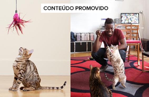 Coisas para presentear seu felino no Dia Mundial do Gato
