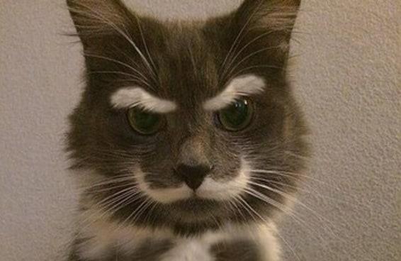 16 motivos para NUNCA ter um gato