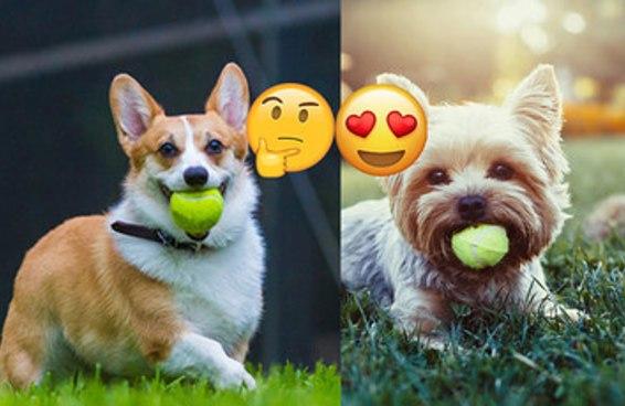 Responda essas perguntas e diremos qual cachorrinho mais combina com você