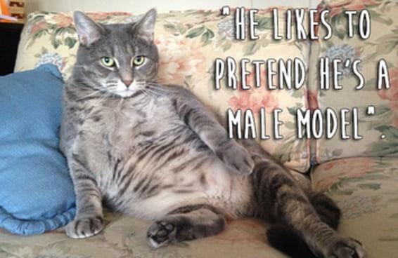 23 coisas realmente estranhas que os gatos fazem
