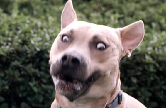 Cães correm atrás de guloseimas em câmera lenta