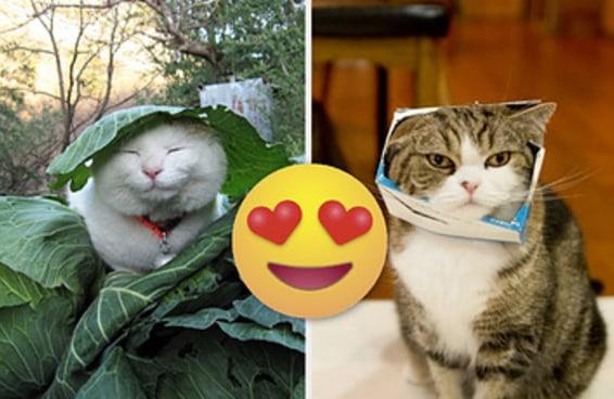 Estes Instagrams provam que os gatos são os verdadeiros donos da internet