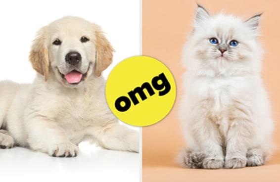 Todo mundo é uma combinação de uma raça de cachorro com uma raça de gato — Veja a sua