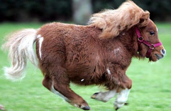 Que tipo de cavalo você é?