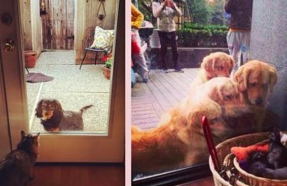 19 cães e gatos em lados opostos de portas transparentes