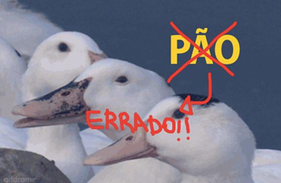 Muita gente entrou em pânico ao descobrir que dar pão para os patos pode ser fatal