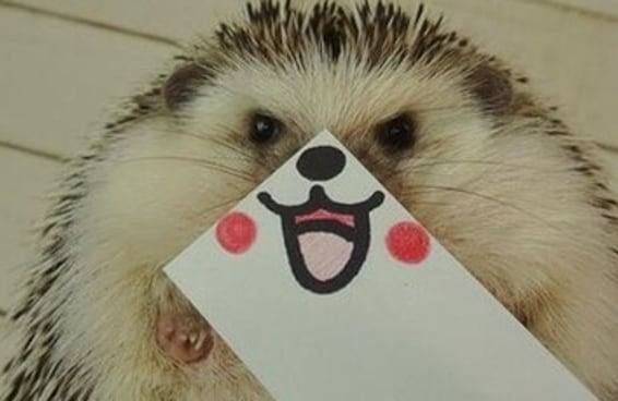 As fotos desse ouriço com caras engraçadas são a melhor coisa que já aconteceu no Twitter