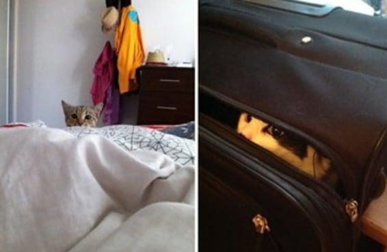 18 fotos que mostram como a sua vida muda depois que você adota um gato