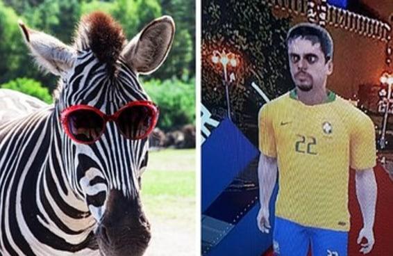 Qual zebra da Copa é você?